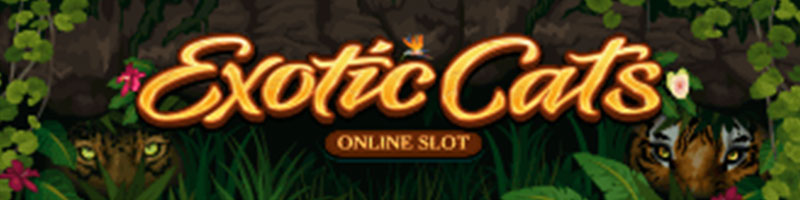 Play Exotic Cats Slot and WIN 100 - view
